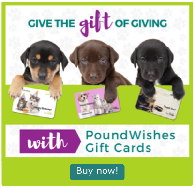 Gift Card Pop Up